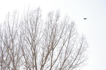 《树.鸟》