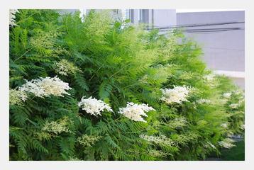 绿叶丛中白
