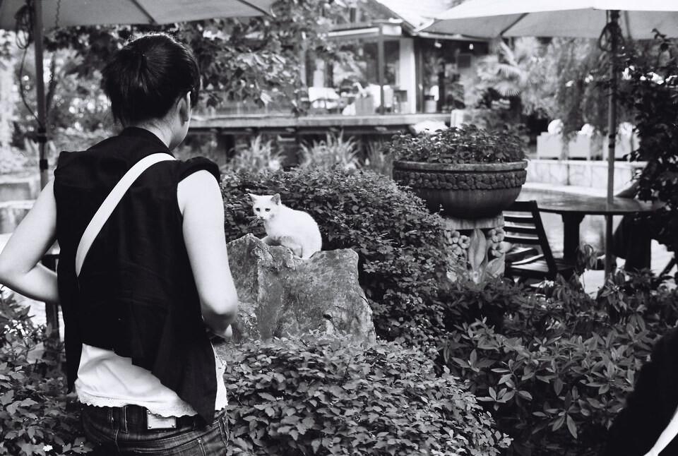 宝盈会备用网址-【哈尔滨水泥烟囱粉刷美化图案设计施工浩久公司】