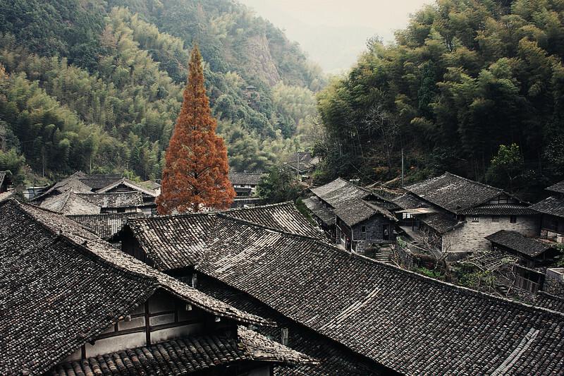 一棵大松树村中有棵笔直高大的 ...