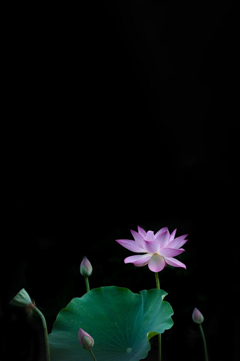 澳门新葡新京ag-经典散文,中国古代诗歌散文欣赏,2019年河北高考满分作文一:在希望的田野里辛