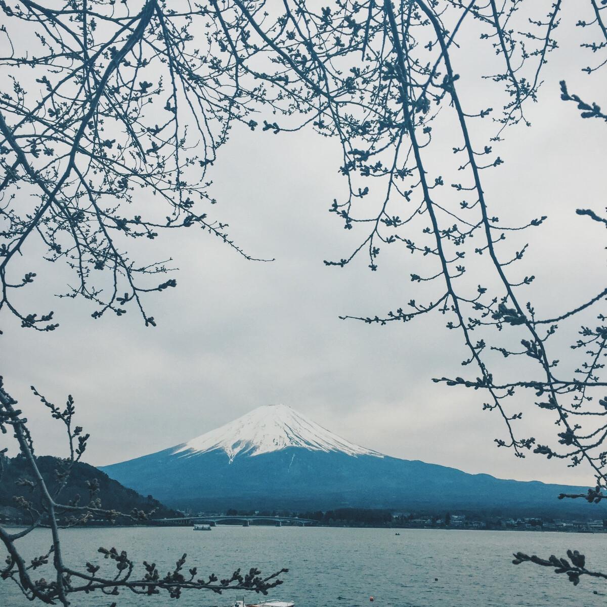富士山樱花_富士山与樱花 - OliviaZZ