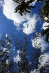 椰树+蓝天白云