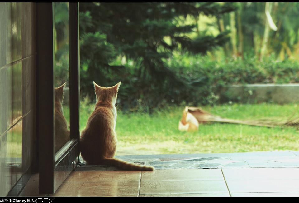 猫的守望<br /> 想不到文山湖猫王也有这天,哇咔咔,平时那么拽