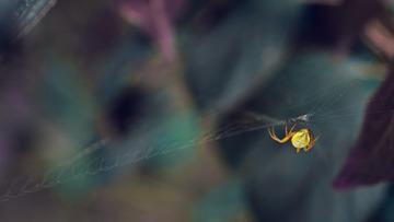 所有的蜘蛛都是孤独的行者