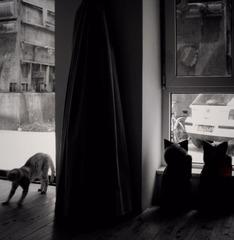 双猫傍地走,安能辨我是雄雌?