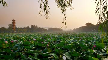 2莲湖之夏