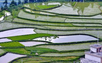 翠绿田野    沉甸甸的稻香