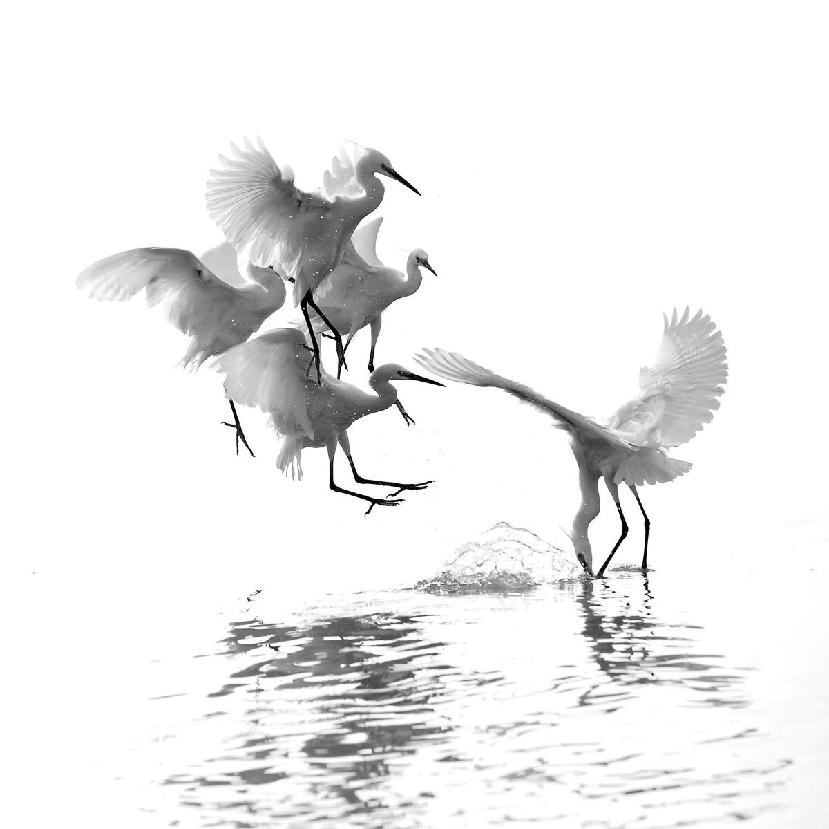 人为财死,鸟为食......