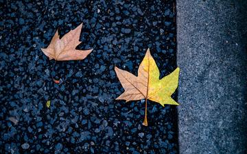 路上的落叶