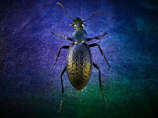 图虫大洲-9