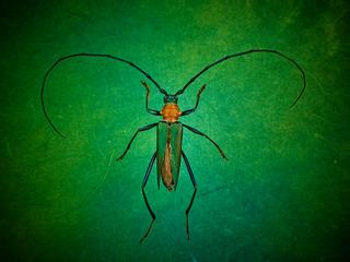 图虫大洲-8