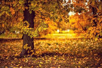 秋色。卡洛明斯克庄园,莫斯科