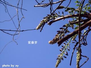 SL370130.jpg