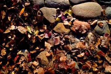 榈庭多落叶,慨然知已秋。