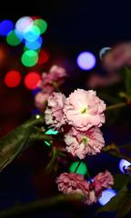花想衣裳月想容,春风拂槛露华浓。霓虹闪烁你想啥……