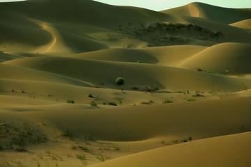 沙漠的柔美