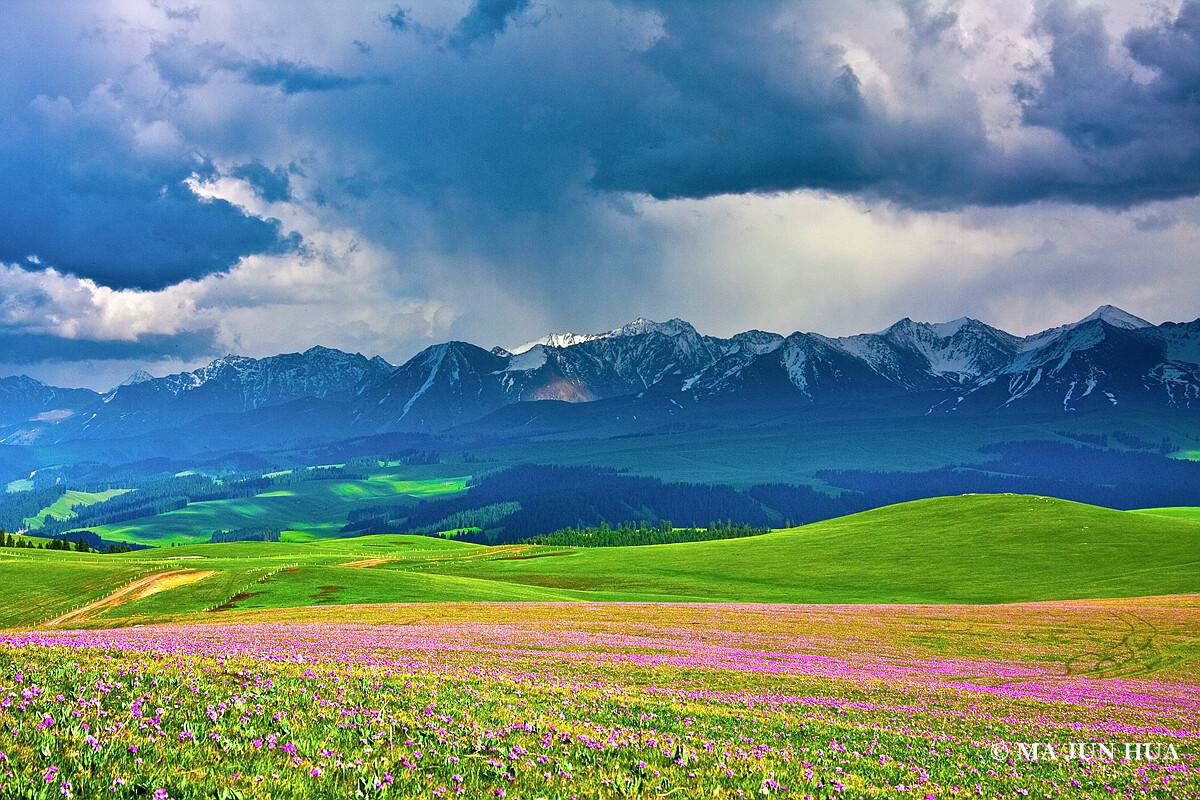 一张老片子,拍摄于伊犁特克斯县喀拉峻大草原。