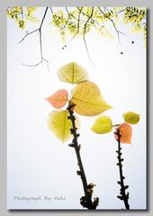 Plants (5).jpg