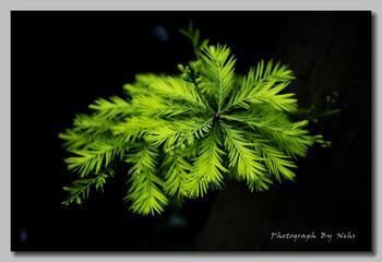 Plants (9).jpg