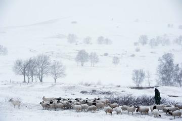 风雪牧羊人