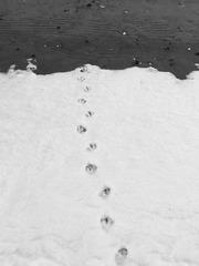 雪地上的脚印