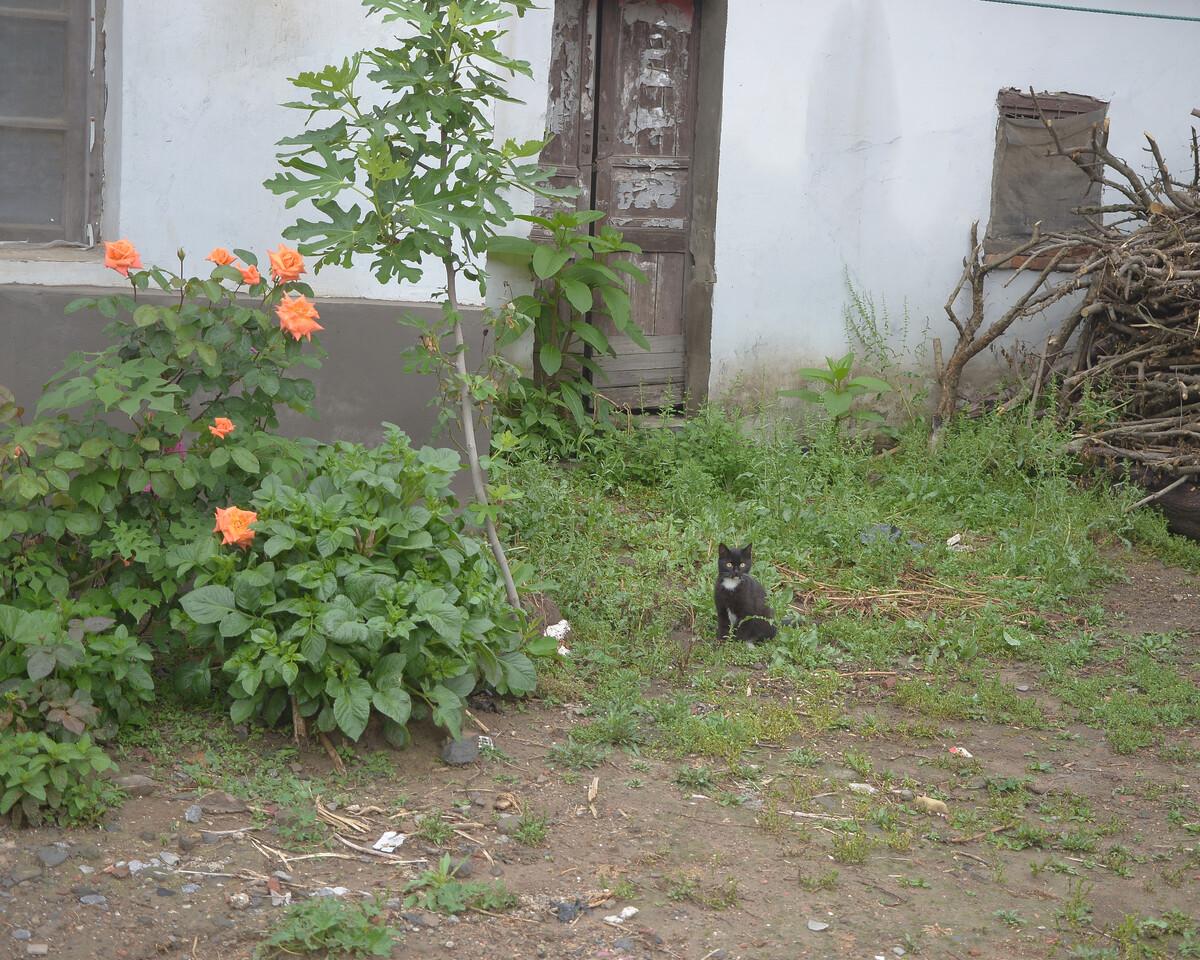 2018年4月 安徽淮南 一只猫