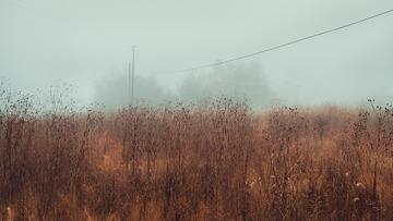 荒草丛中的迷雾