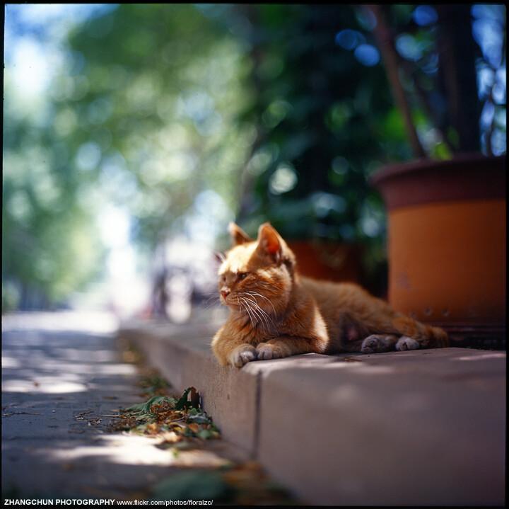 猫咪的生态