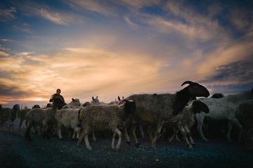夕阳遇见牧羊