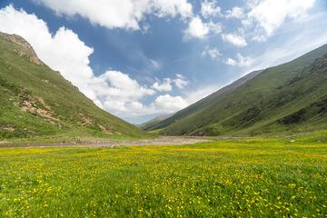 祁连山山谷里的野花儿