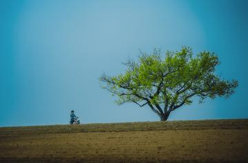 村外的老梨树