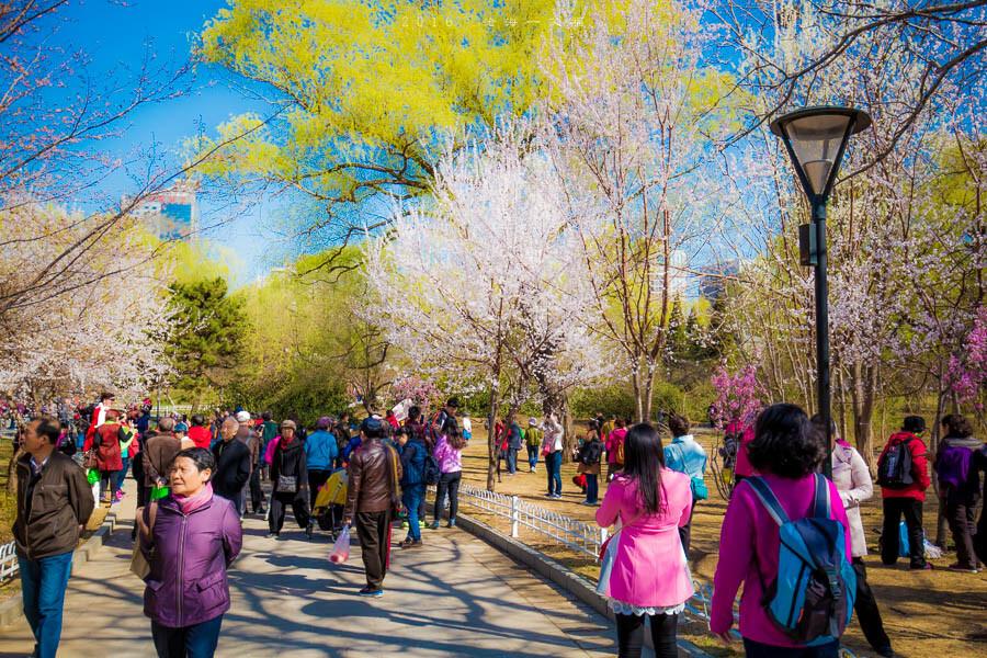 澳門威尼斯手游官方-138万起住上海三房,还能享受到如此优越的生活品质