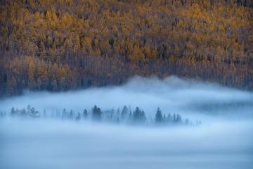 迷雾松叶林