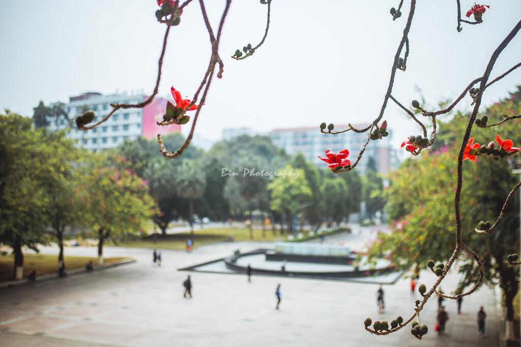 摄于华南师范大学,踏春赏红棉