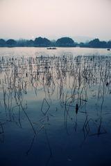 西子湖畔4