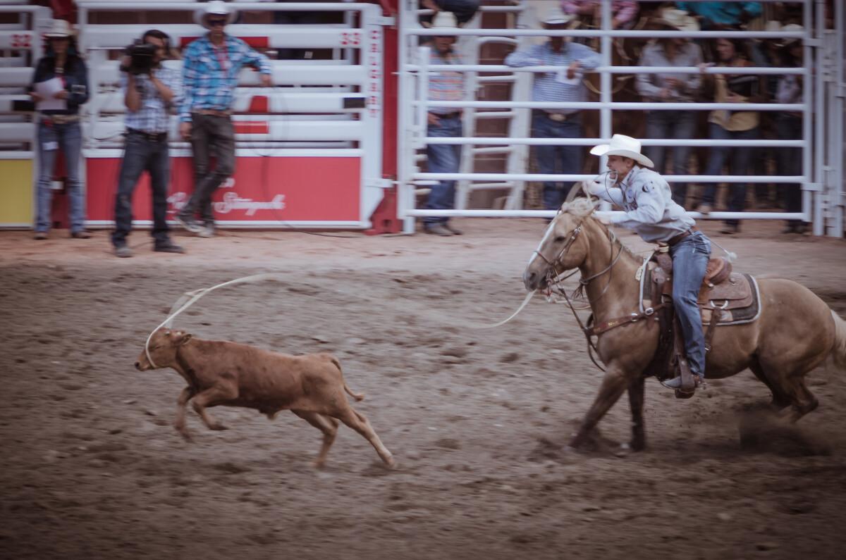 套牛犊(Tie DownRoping):技术含量最高的牛仔竞技项目,手眼身法步缺一不可,还要有训练有素的坐骑在牛仔将绳索套住牛犊时止步不前,牛仔趁机跳下来闪电般捆住牛犊三条腿。
