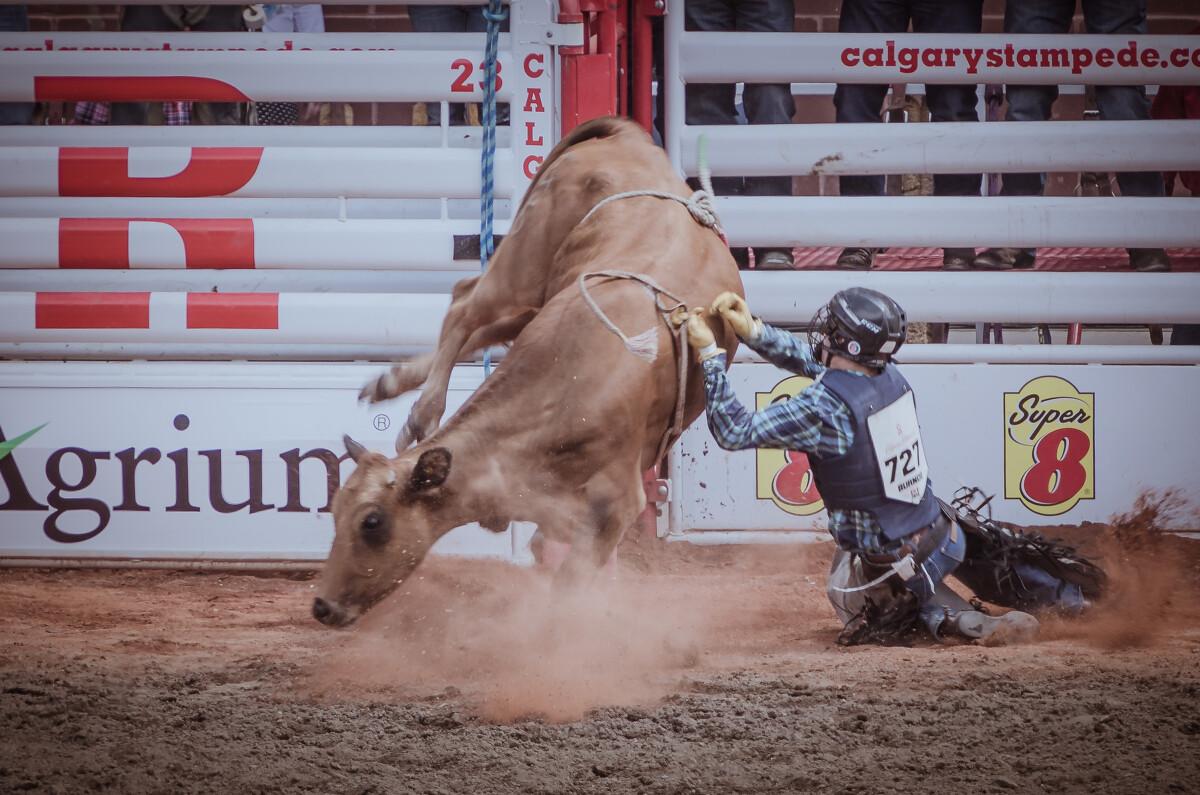 骑蛮牛者跌落瞬间