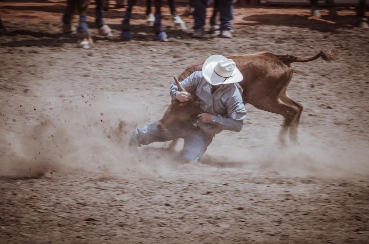 扳小牛(SteerWrestling):时机、配合、力量是取胜的要素,小牛冲出后,牛仔骑马随后赶上,飞身下马,抓住牛角将其扳倒,牛身与四肢必须躺卧一侧计时方才结束。