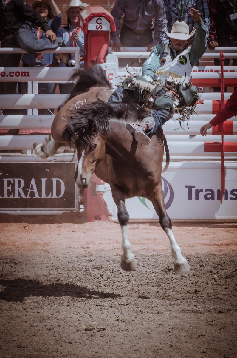 骑有鞍野马(SaddleBronc):马背上有鞍,但马性更狂,更会甩人,未在马背上坚持八秒或空手碰触野马任何部位者被淘汰。