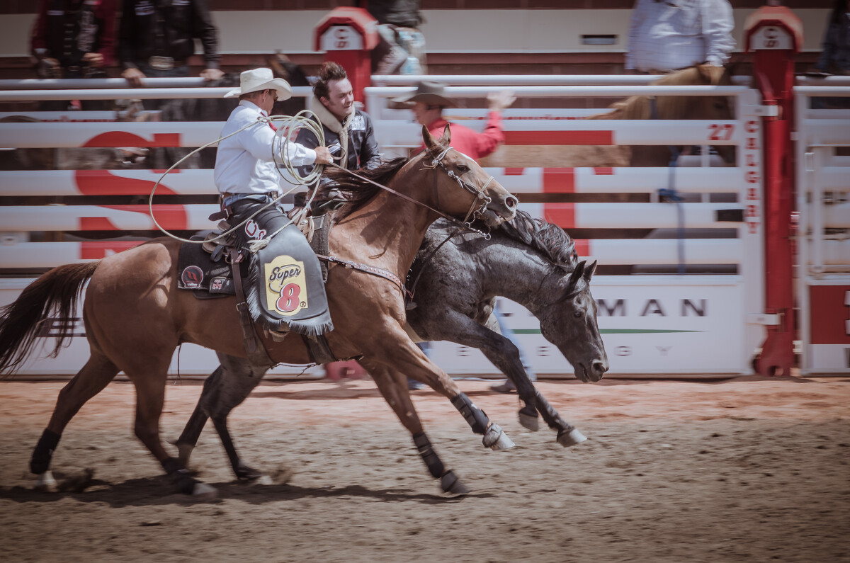 骑有鞍野马(SaddleBronc)保护者上前帮忙。