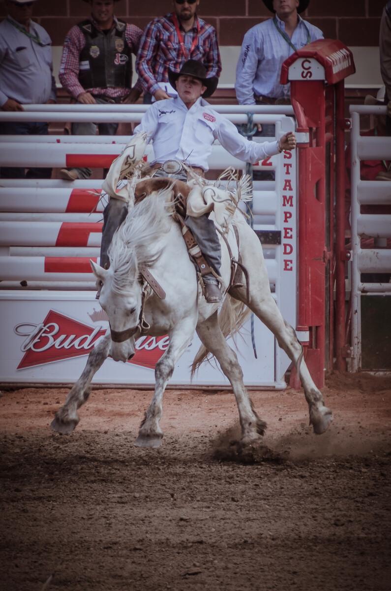 骑有鞍野马(SaddleBronc)