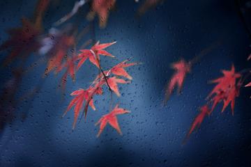 一阵冬雨一阵凉