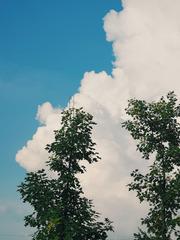两棵树,一朵云,归于空