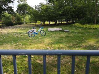 孤独的共享单车