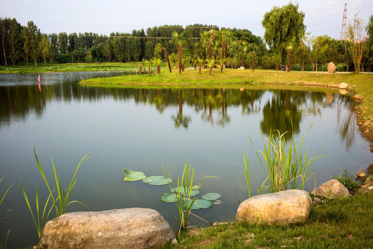 竹叶海公园的下午图片