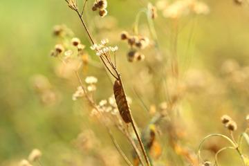 从草丛飞出的花蝴蝶,但不是现在