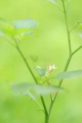 脚踏两朵花