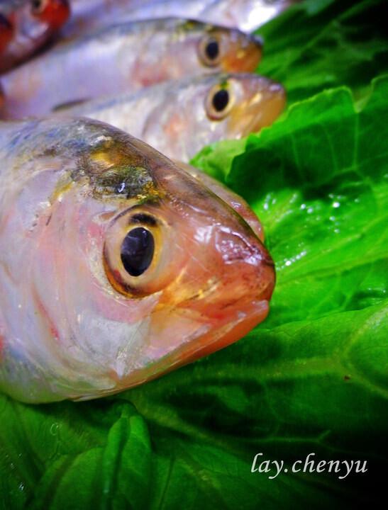 fish<br />