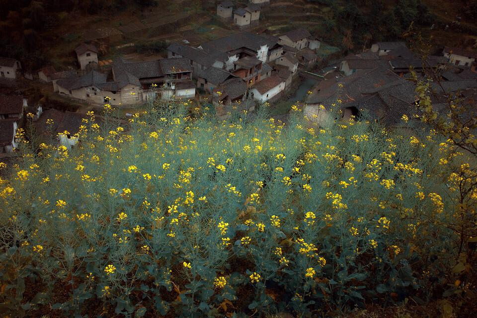 花 绕 着 村<br /> 花 绕 着 村
